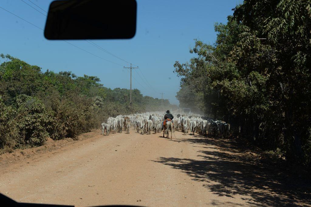 途中の牛さん